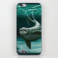 hawaiian iPhone & iPod Skins featuring Hawaiian Monk Seal ~ Acrylic by Amber Marine