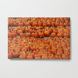 More than a peck of pumpkins at Peck's Produce Farm Market! Metal Print
