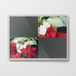 Mixed Color Poinsettias 2 Blank Q6F0 Metal Print