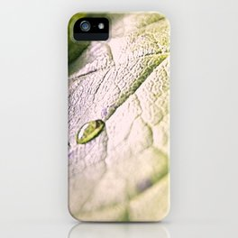 Water Drops On Rose Leaf iPhone Case