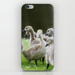 Group of Baby Canada Geese iPhone Skin