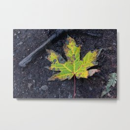 Canadian Fall Leaf Metal Print