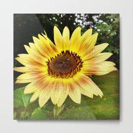 Sunflower Rain Metal Print