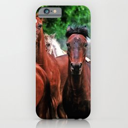 Polish Arabian Mares iPhone Case