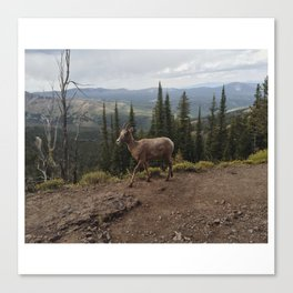 July 24, 2015 / Yellowstone National Park Canvas Print