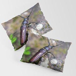Costa Rica Beetle Pillow Sham