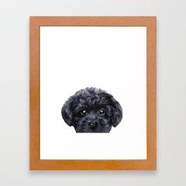 Black toy poodle Dog illustration original painting print Framed Art Print