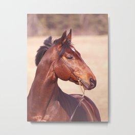 horse collection. Trakehner Metal Print