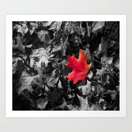Singled Out Red Maple Leaf Art Print