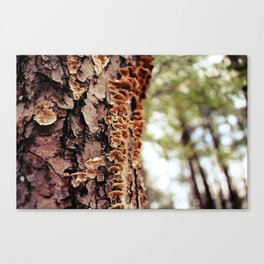 Aspiring Shrooms Canvas Print
