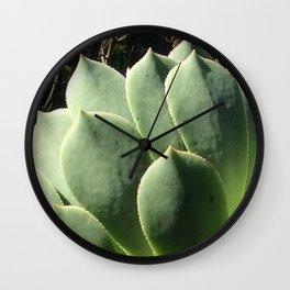 Aeonium lancerottense succulent Wall Clock