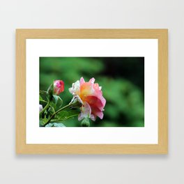 Dew Framed Art Print