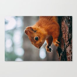 squirrel #society6 #decor #buyart Canvas Print