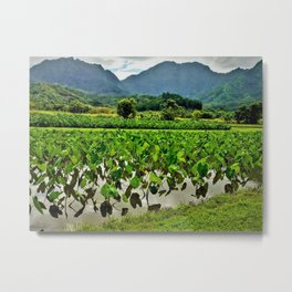 Taro Fields in Hanalei by Reay of Light Metal Print