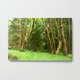 Lush Rain Forest Metal Print
