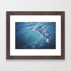 Wild Harbor Seal Framed Art Print