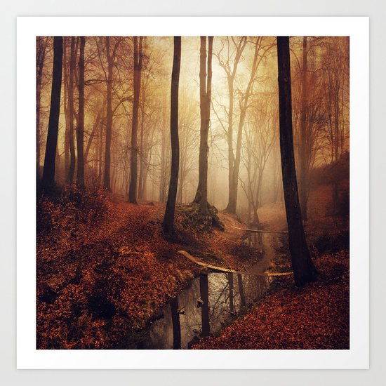 Forest Creek At Sunrise Art Print