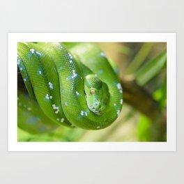 Green snake Art Print