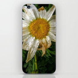 Withering iPhone Skin