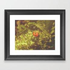 Ladybug and summer Framed Art Print