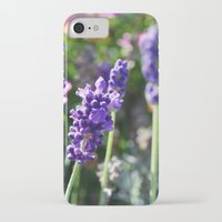 lavender iPhone & iPod Cases featuring Lavender  by JD Photography