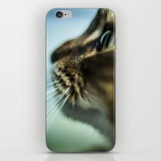 Maine Coon Close Up iPhone & iPod Skin