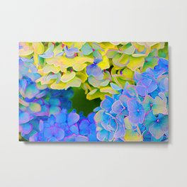 Blue and Yellow Hydrangeas Metal Print