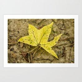The Yellow Leaf Art Print