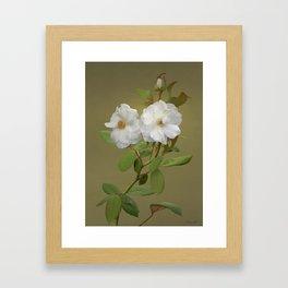 Wild Rose Framed Art Print
