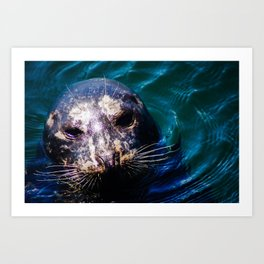 Lucy the seal Art Print