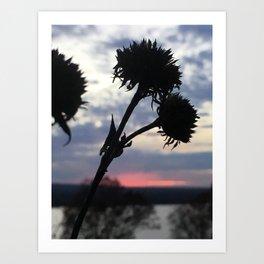 Dying Flower Art Print