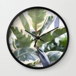 Ficus elastica Tineke     The Houseplant Collection Wall Clock
