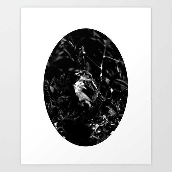 on the side of the bird's eye Art Print