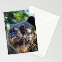 sunny bear Stationery Cards