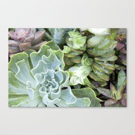 Blue Greens Canvas Print