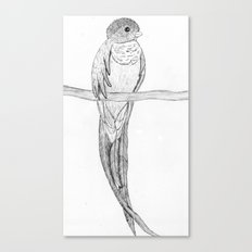 Quetzal Canvas Print