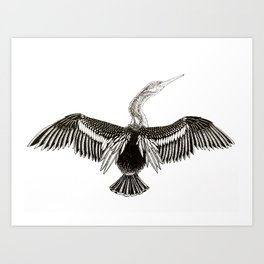 Anhinga Art Print