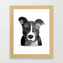 Pit Bull Dogs Lovers Framed Art Print