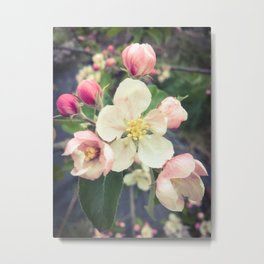 beautiful apple blossom Metal Print