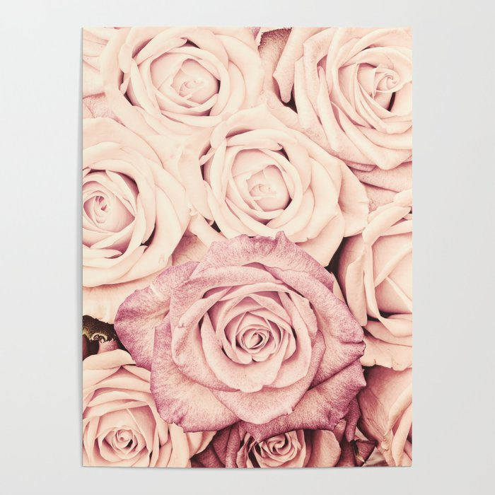 Some people grumble Floral rose roses flowers garden pink Poster