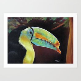 Toco Toucan (Ramphastos Toco) Pastels Artwork Art Print
