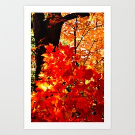 Fiery Autumn Art Print