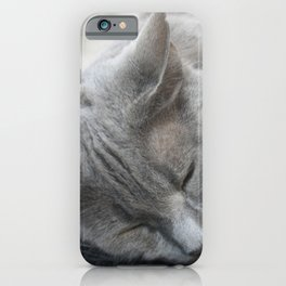 Beautiful Grey Cat Sleeping iPhone Case