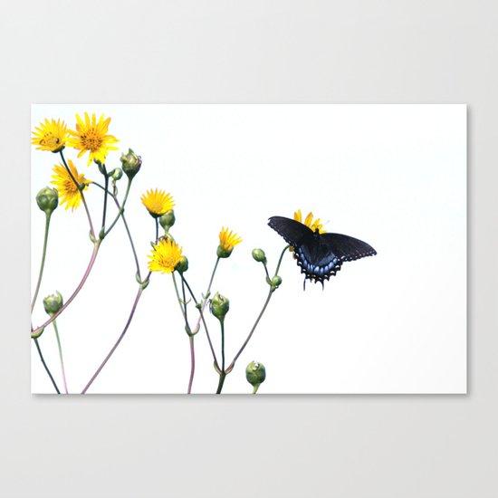 Butterfly Prairie Canvas Print