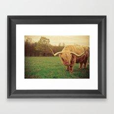 Scottish Highland Steer - regular version Framed Art Print