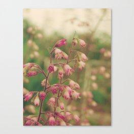 Coralbells Canvas Print