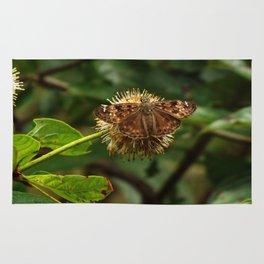 Moth on a Puffball Rug