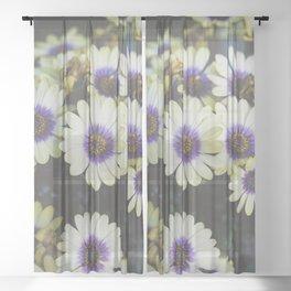 African Daisy Sheer Curtain