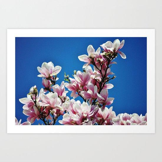 Magnolienblüten  Art Print