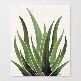 Vintage Agave / Desert Succulent Canvas Print